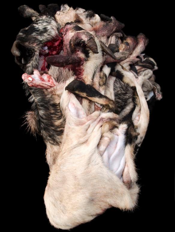Alex Van Gelder, Meat Portraits #28, 2012