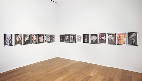 Alex Van Gelder, Meat Portraits at Hauser and Wirth, 2014